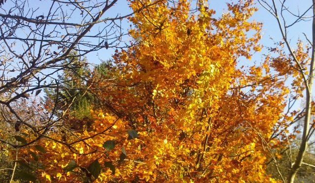 Hecken und Obstbäume